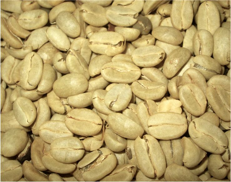 Picture Of Green Coffee Beans